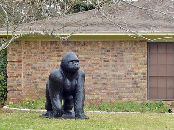 gorilla 002