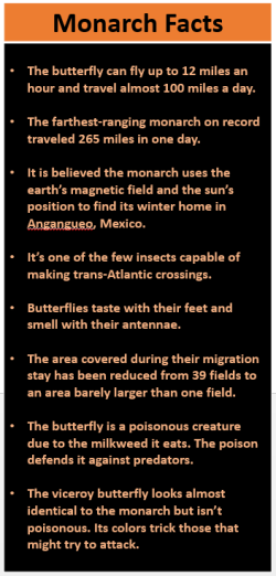 Monarch facts