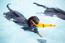 Doggie Day at the Pool