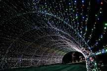 The drive-thru lights at the Christmas at Brazos Valley Tree Farm made for a colorful contrast against the night sky.